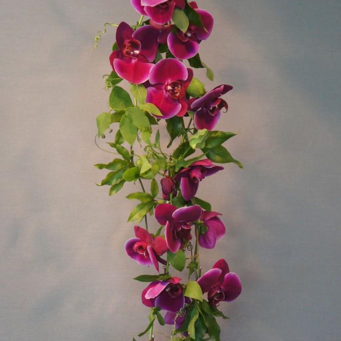 Phalanopsis